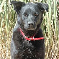 Adopt A Pet :: Saul - Eastsound, WA