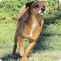 Adopt A Pet :: Kobe - Joplin, MO
