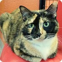 Adopt A Pet :: Beyonce - Sarasota, FL