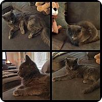 Adopt A Pet :: Lena - Madison, AL
