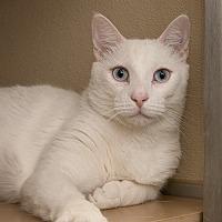 Adopt A Pet :: Franks - Wilmington, DE