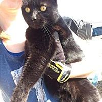 Adopt A Pet :: Jackie - Justin, TX