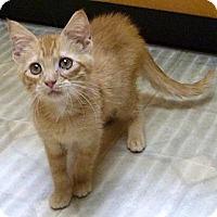 Adopt A Pet :: Happy - Bedford, MA