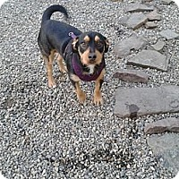 Adopt A Pet :: WInston- in CT - West Hartford, CT