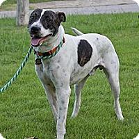 Adopt A Pet :: Alfie - Hagerstown, MD