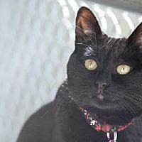 Adopt A Pet :: Lucy - Seal Beach, CA