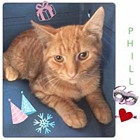 Adopt A Pet :: Phill - Harrisburg, NC