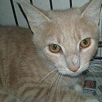 Adopt A Pet :: Blonde - Mt Pleasant, PA