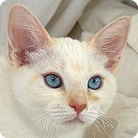 Adopt A Pet :: Tito M - Sacramento, CA