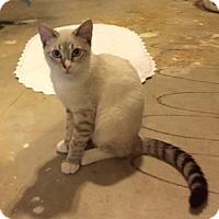 Adopt A Pet :: Tommy - Southlake, TX