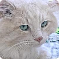 Adopt A Pet :: Leonard - Davis, CA