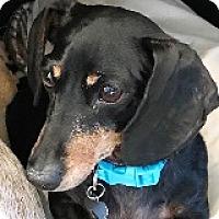 Adopt A Pet :: Roxie Resin - Houston, TX