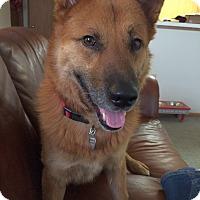 Adopt A Pet :: Riggs - Columbus, OH