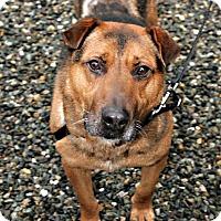 Adopt A Pet :: Gus - Bellingham, WA