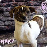 Adopt A Pet :: Gopher - Newport, KY
