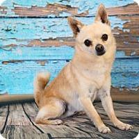 Adopt A Pet :: Chico - Yucaipa, CA