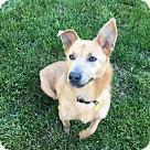 Adopt A Pet :: Molly Dolly
