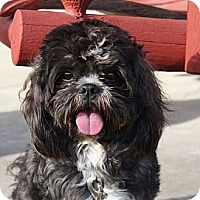 Adopt A Pet :: Winston - PENDING, in Maine - kennebunkport, ME