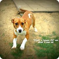 Adopt A Pet :: Ellie - Gadsden, AL