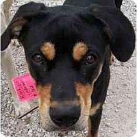Adopt A Pet :: JodyHOUSEBROKE - Richmond, IL