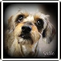Adopt A Pet :: Sadie - Pascagoula, MS