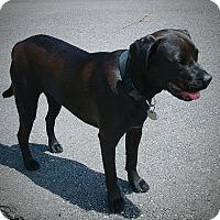 Adopt A Pet :: Bayou - Homewood, AL