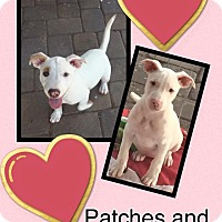 Adopt A Pet :: Patches - Scottsdale, AZ