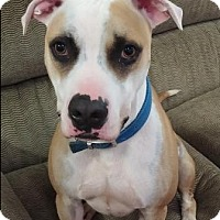 Adopt A Pet :: JAXSON (courtesy post) - Elyria, OH