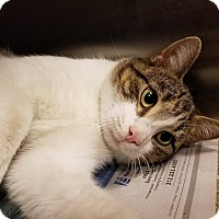Adopt A Pet :: Baba - Windsor, VA