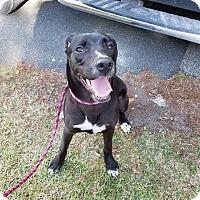 Adopt A Pet :: Cora Brienne - Gainesville, FL