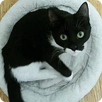 Adopt A Pet :: Nibbler - Philadelphia, PA