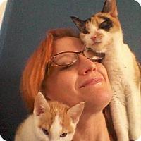 Adopt A Pet :: Joy & her kitten-ADOPTED - Arlington, VA