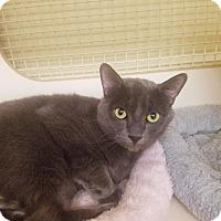 Adopt A Pet :: Sven - Warren, MI