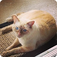 Adopt A Pet :: Leo - Orange, CA