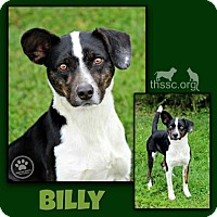 Adopt A Pet :: Billy - Sullivan, IN