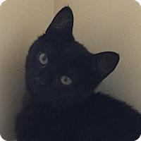 Adopt A Pet :: Sheba - Mt Pleasant, SC
