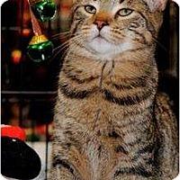 Adopt A Pet :: Brigetta, Fanz - Harrisburg, NC