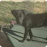 Adopt A Pet :: Kringle - cutie - Phoenix, AZ