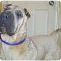 Adopt A Pet :: Winter - Bethesda, MD