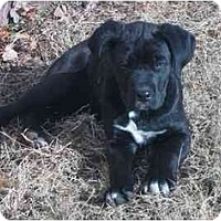 Adopt A Pet :: Rufus - Chandler, IN