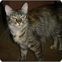 Adopt A Pet :: Monique - lake elsinore, CA