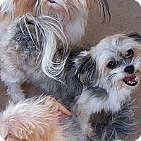 Adopt A Pet :: Utah ~ Pure breed Miki - San Angelo, TX