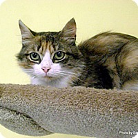 Adopt A Pet :: Ginger - Lancaster, MA