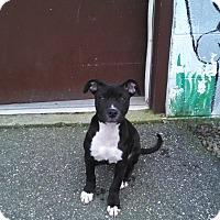 Adopt A Pet :: Wylie - Willington, CT