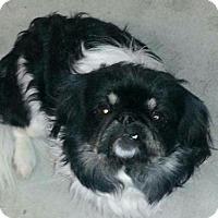 Adopt A Pet :: BAXTER - Mission Viejo, CA