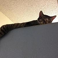 Adopt A Pet :: Knuckle - Fresno, CA