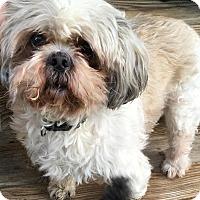 Adopt A Pet :: Oscar (Courtesy Post) - Upper Sandusky, OH