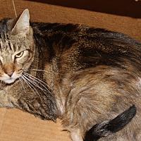 Adopt A Pet :: Corey - Torrance, CA