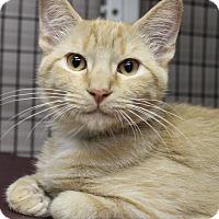 Adopt A Pet :: Keith - Medina, OH