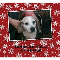 Adopt A Pet :: LIZZY - Ventnor City, NJ